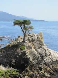 Single tree on rock