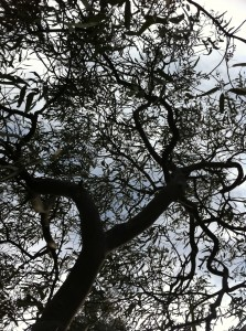 Tree branches view from below