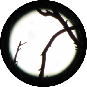 circle-moon with branches